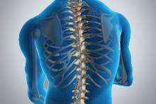 la-columna-vertebral